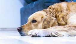الأعراض بعد تطعيم الكلاب