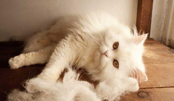 كرات الشعر عند القطط