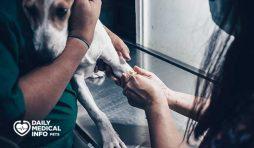 مرض بارفو عند الكلاب