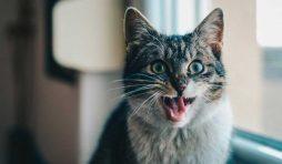 سيلان لعاب القطط
