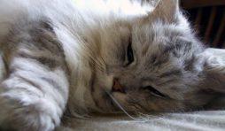 أسباب خمول القطط