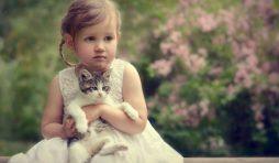 أنواع القطط المنزلية الأكثر رقة وحنانا