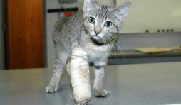 علاج كسور العظام في القطط