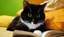 كيف يعمل عقل القطط