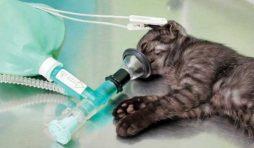 مخاطر تخدير القطط