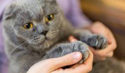مخاطر نزع أظافر القطط