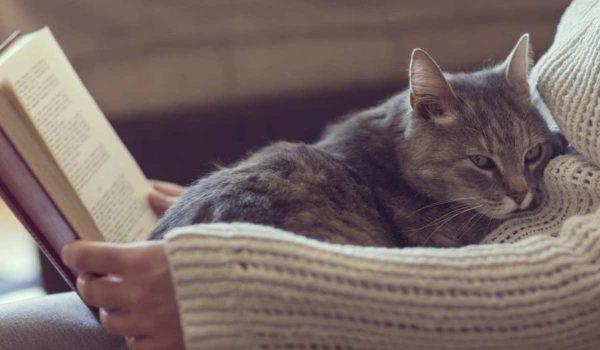معلومات عن تربية القطط قبل الشراء
