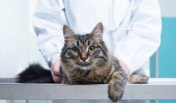 نصائح تساعد قطتك على الحياة لمدة أطول