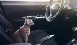 نصائح عند السفر مع القطط بالسيارة