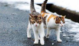 نصائح في مساعدة قطط الشارع في فصل الصيف