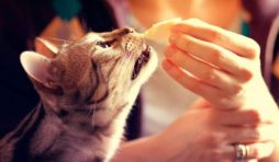 أكل منزلي للقطط