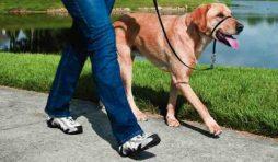 تدريب الكلب على المشي بالسلسلة