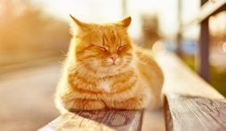 تربية القطط في الصيف
