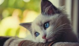 تصرفات تؤدي إلى اكتئاب القطط
