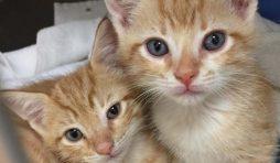 حاسبة موعد ولادة القطط