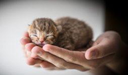 طرق العناية بالقطط الصغيرة حديثة الولادة