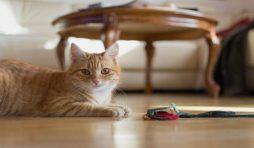 طرق تربية القطط في المنزل
