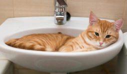 طريقة استحمام القطط