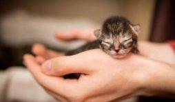 كيفية الاعتناء بالقطط حديثة الولادة