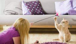 كيفية التعامل مع القطط الجديدة
