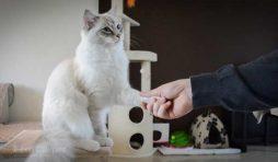 كيفية تدريب القطط