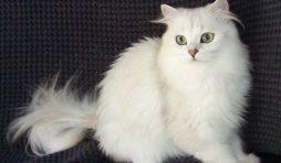 كيف تتعامل مع القطط الخائفة في أول يوم في المنزل