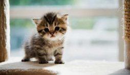 كيف تعتني بالقطط الصغيرة
