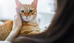 كيف نتعامل مع القطط