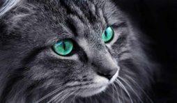 لماذا تلمع عيون القطط ليلا