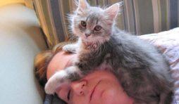 لماذا تنام القطة على رأسي