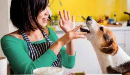 ماذا تأكل الكلاب من طعام البيت