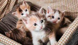 معلومات هامة عن القطط الصغيرة بعد الولادة