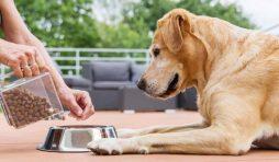 هل تستطيع الكلاب أن تتذوق الطعام