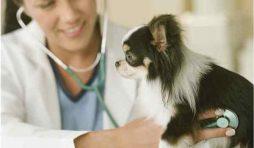 هل تصاب الكلاب بأمراض القلب