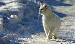 هل قطتك مستعدة لفصل الشتاء