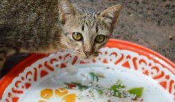 وصفات تساعدك في تحضير طعام القطط