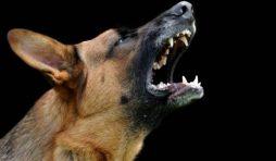 أسباب أنين و عواء الكلاب المختلفة