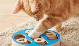 ألعاب ترفع مستوى ذكاء القطط