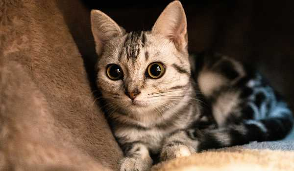 العمر الافتراضي للقطط و عمر القطط المناسب للتزاوج