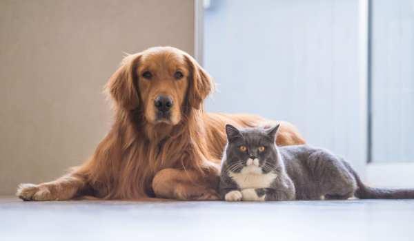 حشرات تصيب الكلاب والقطط
