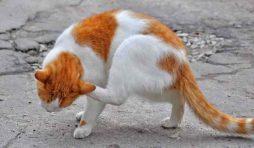 طريقة علاج فطريات القطط