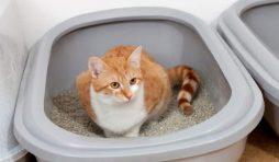 عادات غريبة تفعلها القطط مع الليتر بوكس