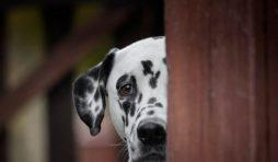 علامات تدل على الخوف عند الكلاب
