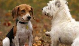 كيفية تقديم كلب جديد لكلبك الحالي