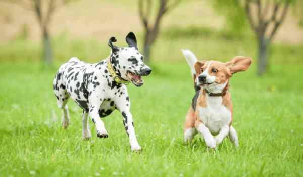 كيفية تهدئة الكلاب النشيطة والمزعجة