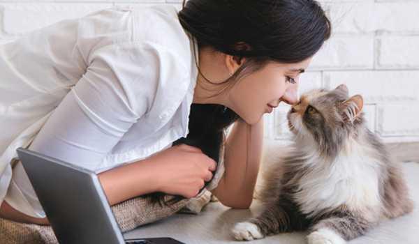 لغة القطط مع الإنسان وتفسيرها