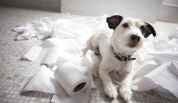 لماذا تأكل الكلاب المناديل الورقية والأوراق