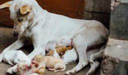 لماذا تأكل الكلبة أولادها