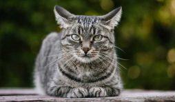معلومات خاطئة عن صحة القطط