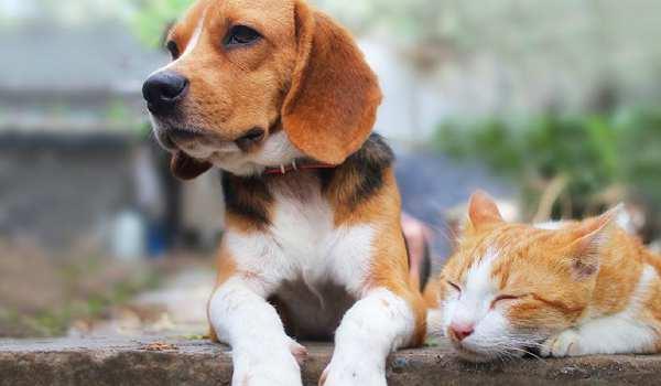 هل يجب تطعيم الكلاب والقطط سنويا